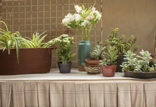 Cinco flores de fácil cultivo para ter em casa