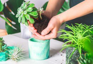 Natureza dentro de casa: veja dicas de como montar um jardim de inverno