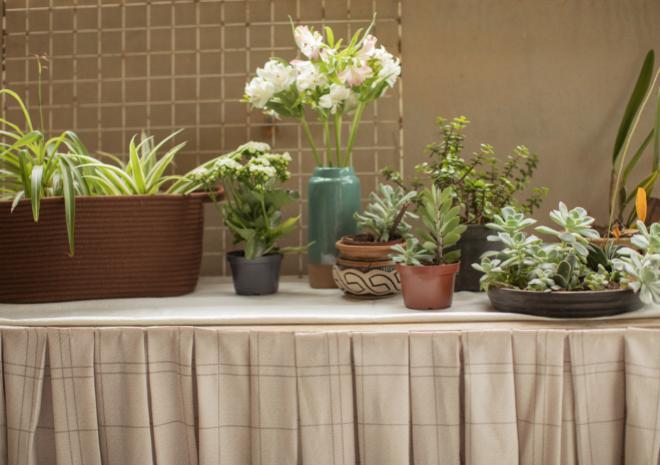 Primavera à vista: como cuidar das flores dentro de casa